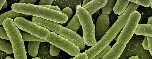 probiotica tegen neerslachtigheid
